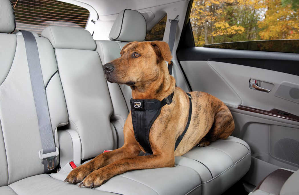 Pet Safety in the Car.
